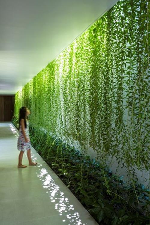 Một hành lang dài xuyên suốt cả ngôi nhà, đi qua các căn phòng và ô sân vườn tự nhiên. Tấm rèm dây leo đầy sức sống giúp làm giảm bớt cái nắng gay gắt của mùa hè, đồng thời tạo nên những họa tiết thú vị và biến đổi linh hoạt khi ánh nắng xuyên qua.