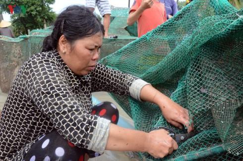 Bão số 12 quét qua, gia đình nào thiệt hại ít cũng 2.000 con tôm hùm, nhiều thì cũng đến cả trăm ngàn con tôm hùm