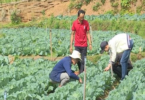 Nhiều người dân sinh sống quanh vùng đã đến tận trang trại của Giàng A Dạy để học tập mô hình trồng rau sạch có áp dụng công nghệ Israel. (Ảnh: KT)