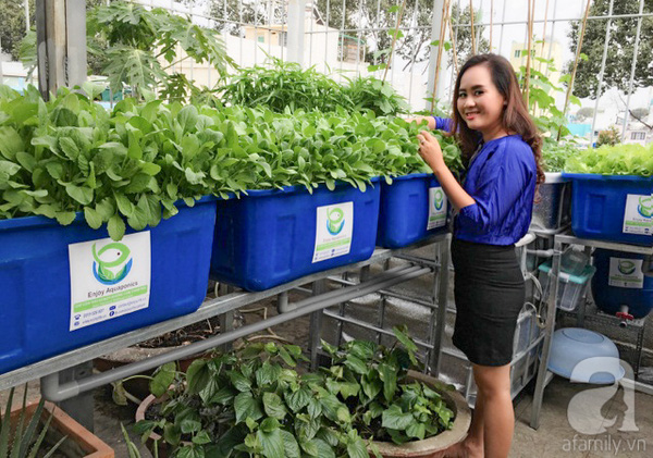 Phương Lan bỏ việc giám đốc ngân hàng để trồng rau sạch.