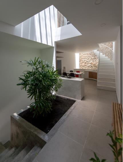 Cây xanh trong nhà được trồng dọc khu vực giếng trời, nơi có ánh sáng tự nhiên.