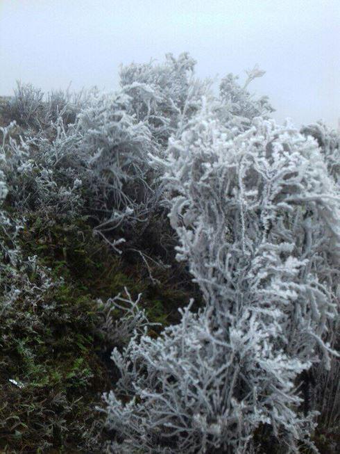 Băng tuyết phủ dầy trên đỉnh Mẫu Sơn - Ảnh 3.