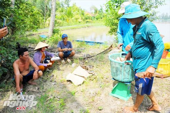 Cận cảnh nuôi cá ruộng mùa lũ ở miền Tây không cho ăn vẫn lớn như thổi - Ảnh 17.
