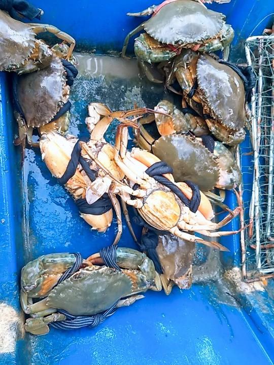 Không cần thị trường Trung Quốc, giá cua biển trong nước vẫn nhảy múa - Ảnh 4.