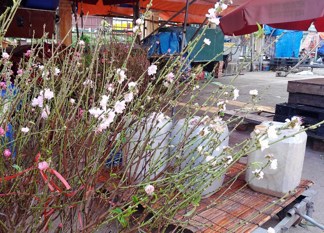 Chuyện lạ: Hoa đào bất ngờ bung nở rầm rộ, giá 200.000 đồng/cành - Ảnh 5.
