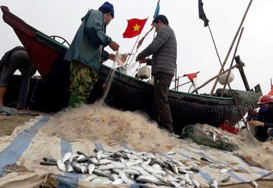"""Ngư dân Sầm Sơn trúng đậm """"lộc biển"""" ngày đầu năm mới - Ảnh 10."""