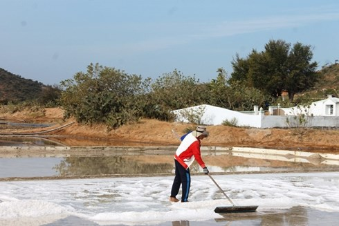 Diêm dân Ninh Thuận trúng vụ muối đầu năm - Ảnh 2.