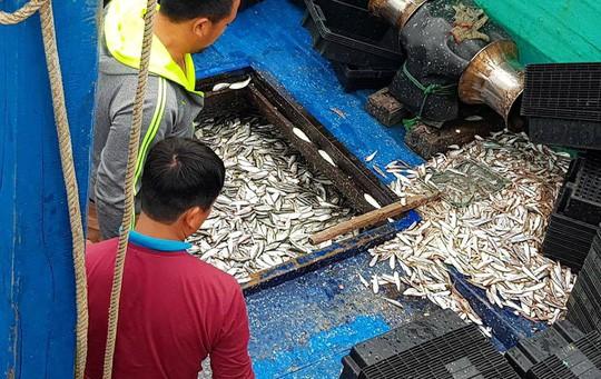 Ngư dân phấn khích trúng đậm lộc biển 4-5 tấn cá mỗi tàu - Ảnh 1.