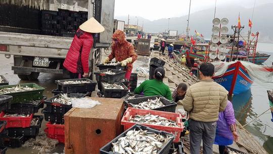 Ngư dân phấn khích trúng đậm lộc biển 4-5 tấn cá mỗi tàu - Ảnh 3.