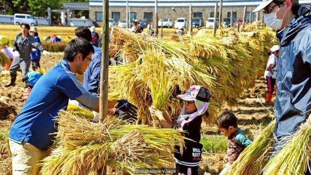 Làng thần kỳ Nhật Bản: Từ nghèo nhất đến nổi tiếng khắp cả nước, doanh số bán gạo tăng 400% nhờ biến ruộng lúa thành tranh - Ảnh 2.
