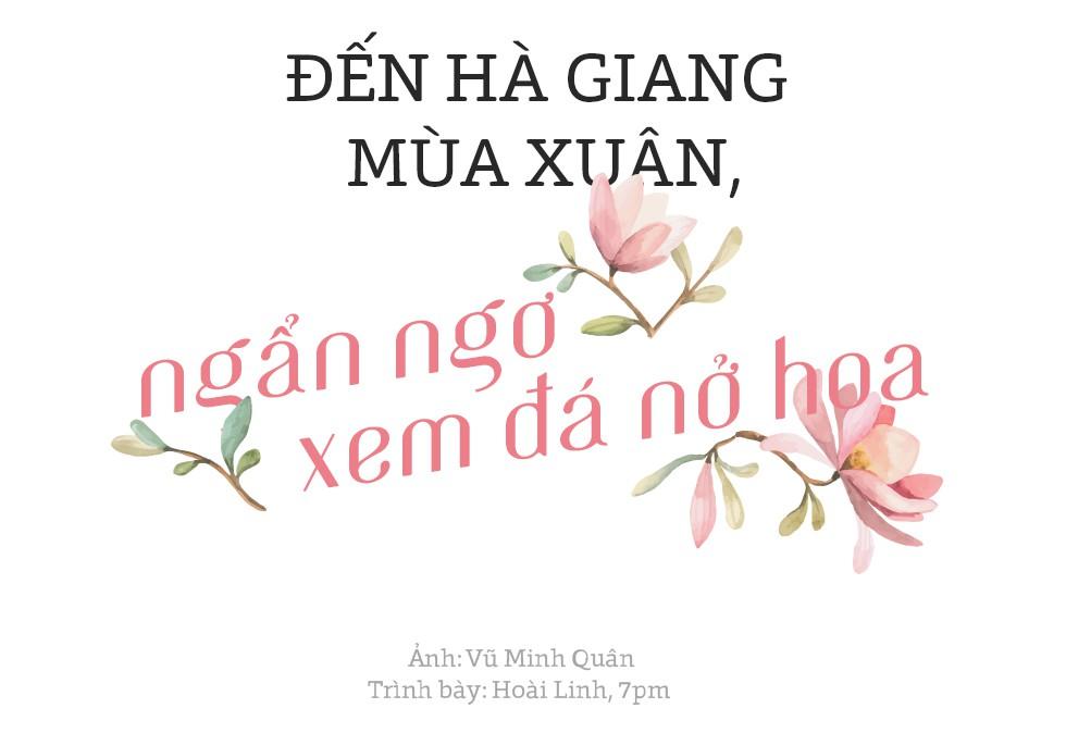 Đến Hà Giang mùa xuân, ngẩn ngơ xem đá nở hoa - Ảnh 1.
