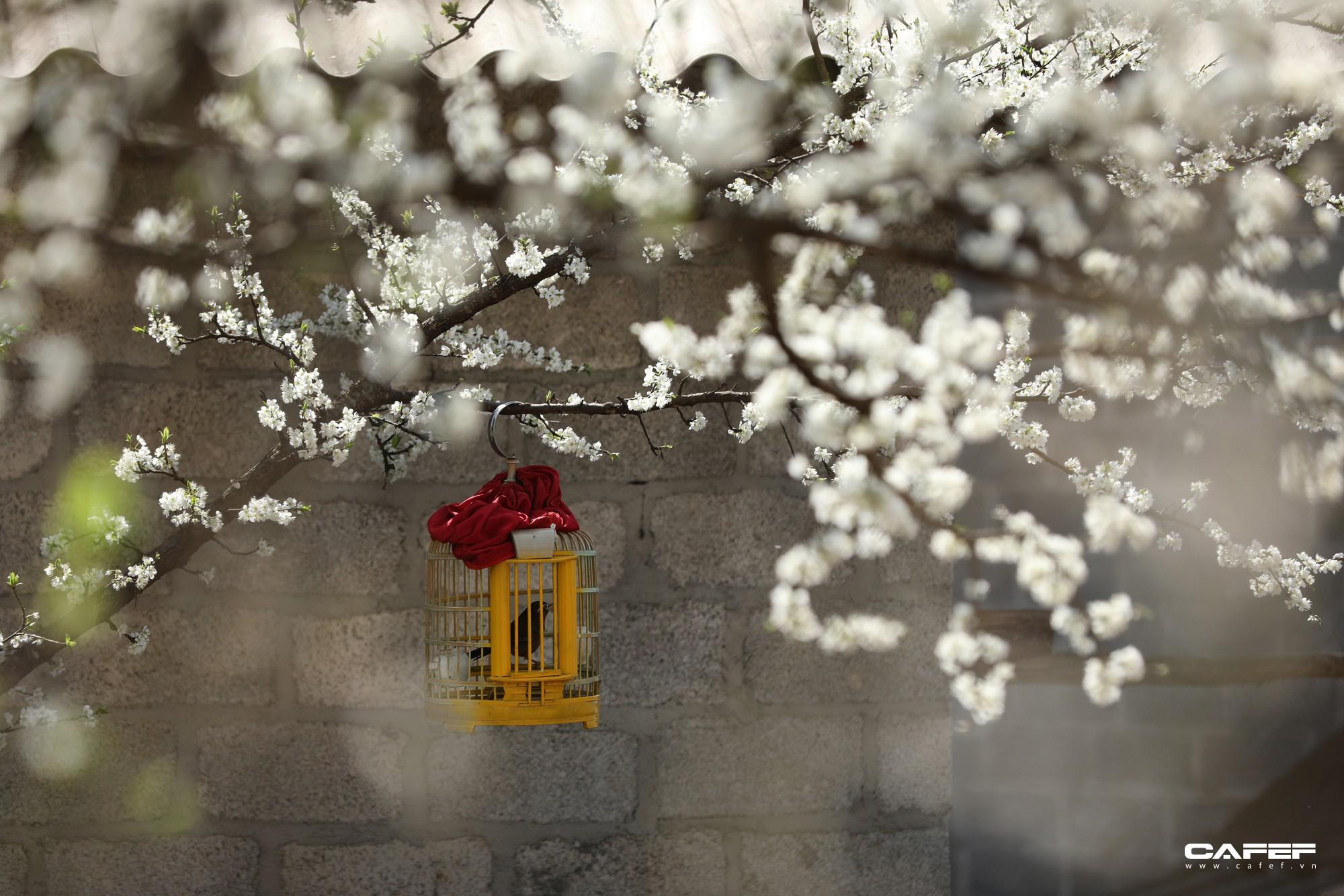 Đến Hà Giang mùa xuân, ngẩn ngơ xem đá nở hoa - Ảnh 8.