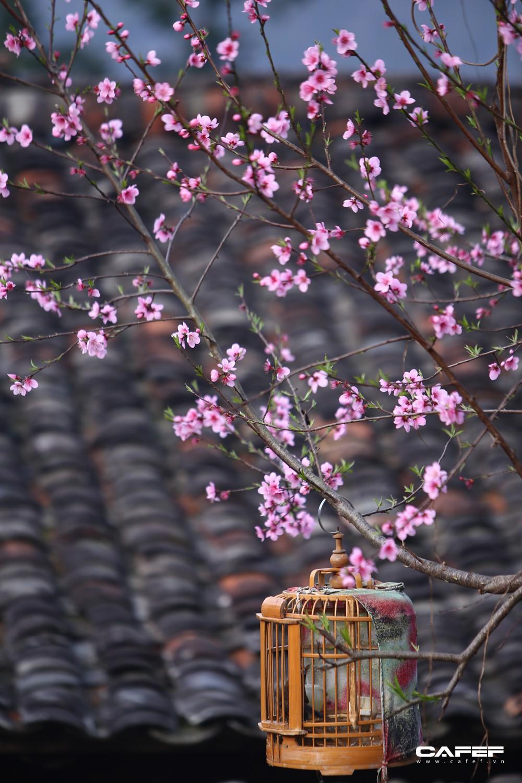 Đến Hà Giang mùa xuân, ngẩn ngơ xem đá nở hoa - Ảnh 10.