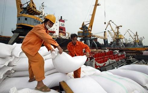 Giá gạo Việt Nam xuất khẩu đã vượt Thái Lan - Ảnh 1.