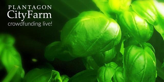 Trang trại trong nhà: Cuộc cách mạng hóa trồng trọt tại Thụy Điển