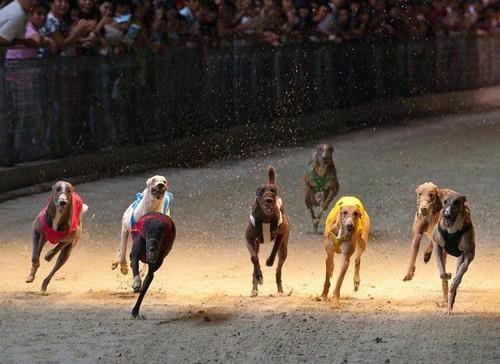 Đà Nẵng sẽ có trường đua ngựa, đua chó rộng hơn 500.000m2 tại Cẩm Lệ - Ảnh 1.