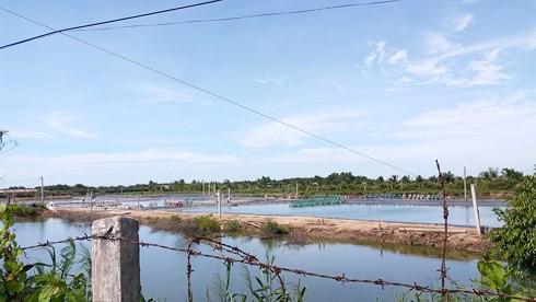 """Cần chấm dứt tình trạng nuôi tôm biển trong vùng """"ngọt hóa""""  - Ảnh 2."""