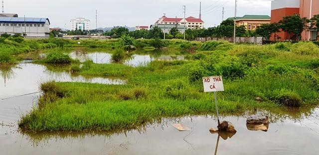 Ninh Bình: Xót xa hàng chục hecta đất vàng bỏ hoang giữa lòng đô thị - Ảnh 1.