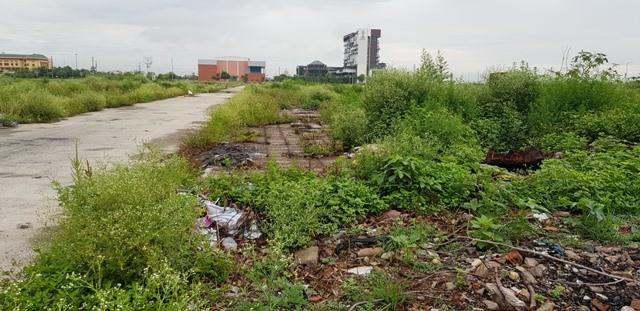 Ninh Bình: Xót xa hàng chục hecta đất vàng bỏ hoang giữa lòng thành phố - Ảnh 2.