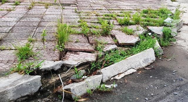 Ninh Bình: Xót xa hàng chục hecta đất vàng bỏ hoang giữa lòng thành phố - Ảnh 3.