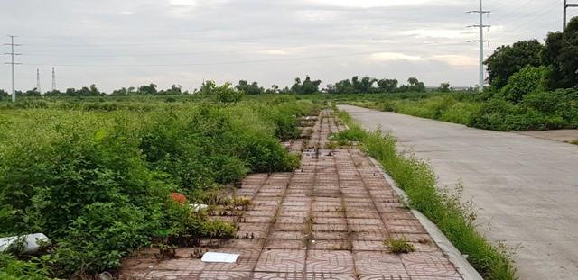 Ninh Bình: Xót xa hàng chục hecta đất vàng bỏ hoang giữa lòng thành phố - Ảnh 4.