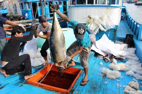 Trầy trật đi biển vụ cá Nam - Ảnh 1.