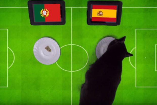'Tiên tri' mèo đen dự đoán Bồ Đào Nha sẽ gục ngã trước Tây Ban Nha - Ảnh 1.