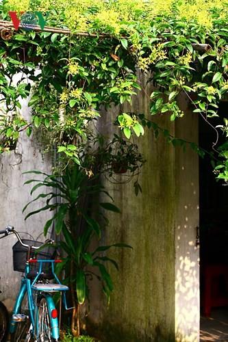 Kinh nghiệm thiết kế sân vườn đẹp - Ảnh 12.