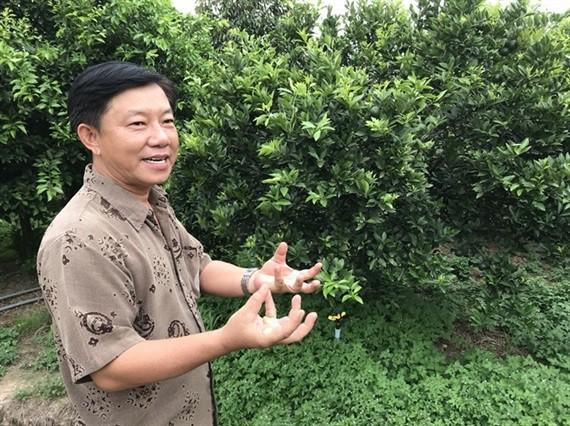 Tây Ninh chuyển đổi cao su, lúa, mì... sang cây ăn quả - Ảnh 1.