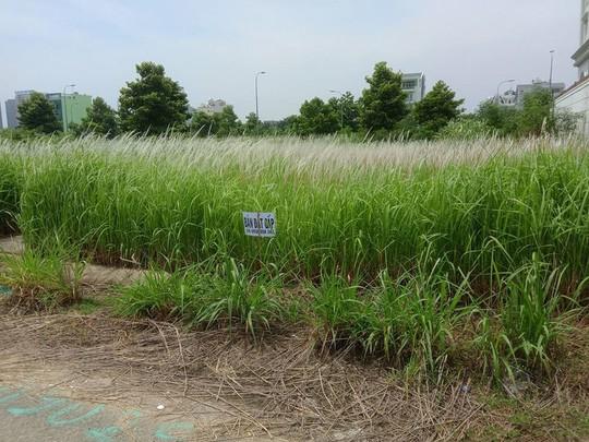 Vừa thông cầu, giá nhà đất đảo Kim Cương đã tăng mạnh - Ảnh 4.