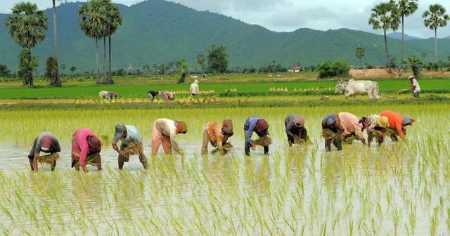 Điều gì khiến Campuchia từ quốc gia đói nghèo, sau 10 năm có gạo xuất khẩu tới 63 thị trường, thu nhập người nông dân tăng 100% chỉ nhờ trồng lúa? - Ảnh 1.
