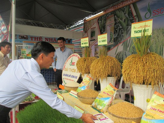 Vì sao xuất khẩu gạo sang Trung Quốc đột ngột sụt giảm? - Ảnh 1.
