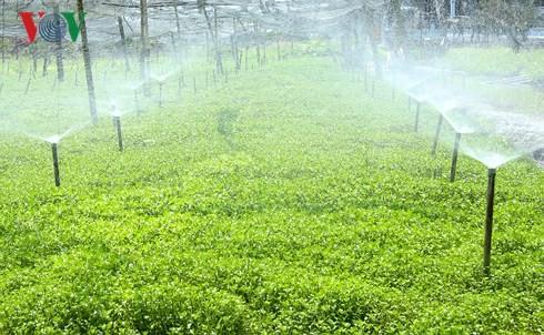 Thu nhập hàng trăm triệu từ mô hình trồng cải xà lách xoong - Ảnh 1.