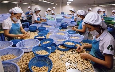 """Các doanh nghiệp ngành điều """"đói"""" vốn và không chủ động nguyên liệu - Ảnh 1."""