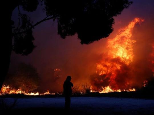 Cháy rừng Hy Lạp: Hàng chục người vượt không nổi biển lửa, chết gục trong sân nhà - Ảnh 5.