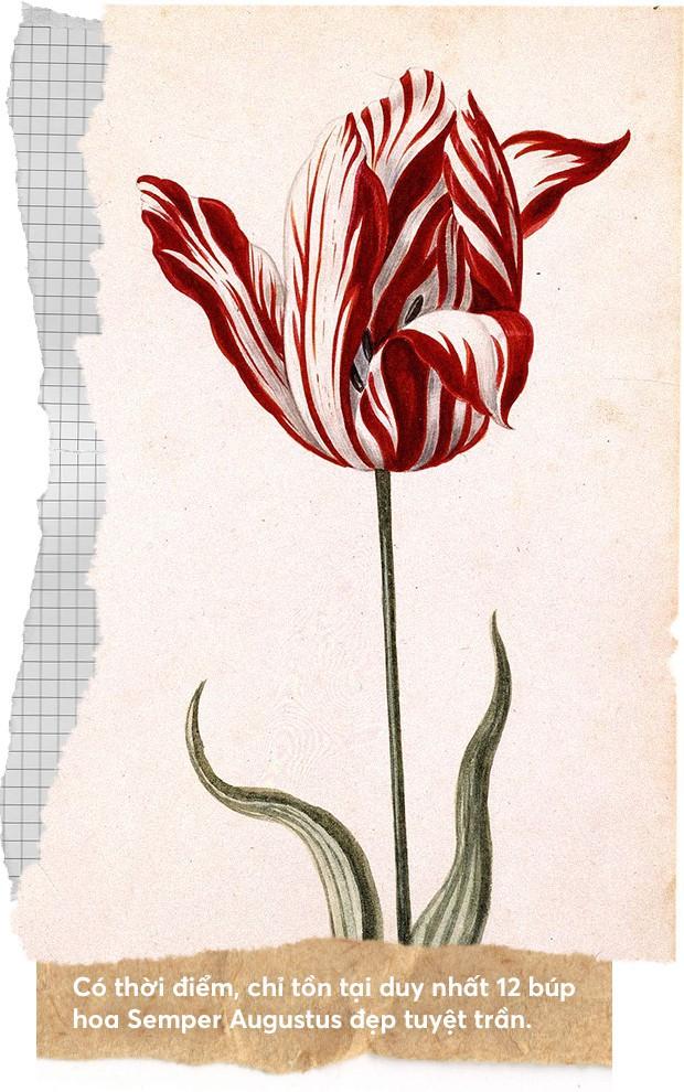 Một khóm hoa tulip dính virus đã tạo nên bong bóng tài chính nổi tiếng nhất lịch sử nhân loại như thế nào? - Ảnh 3.