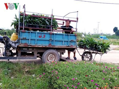Những cánh đồng tiền tỷ ở Văn Giang, Hưng Yên - Ảnh 2.