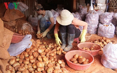 Chi hơn 1 tỷ đồng chống mạo danh thương hiệu khoai tây Đà Lạt - Ảnh 1.