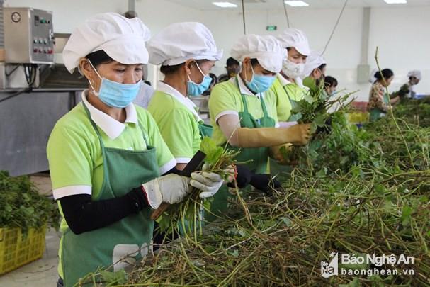 Người nộp thuế lương cao nhất Nghệ An: 2 năm, hơn 1,5 tỷ đồng - Ảnh 1.