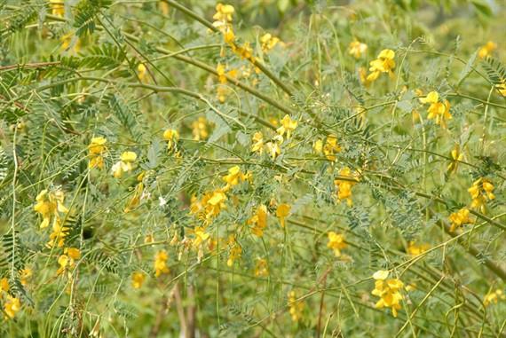 Cận cảnh thiên nhiên ban tặng người dân miền Tây nhiều sản vật trong mùa lũ đẹp - Ảnh 17.