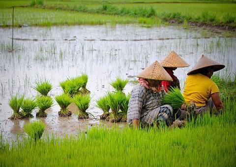 Việt Nam và 7 nước ASEAN có nền kinh tế mới nổi nổi bật nhất địa cầu - Ảnh 1.