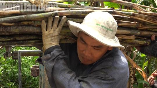 Ứa nước mắt với hình ảnh nông dân trồng mía trắng tay vì lũ - Ảnh 11.