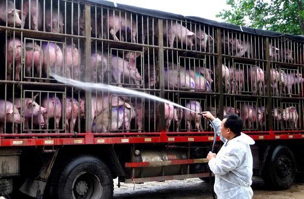 Trung Quốc: Đau đầu vì siêu virus trên lợn, nguy cơ đại dịch mới hoành hành Đông Nam Á - Ảnh 2.