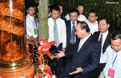 Thủ tướng: Đưa 'quốc bảo' sâm Ngọc Linh thành quốc kế dân sinh - Ảnh 2.
