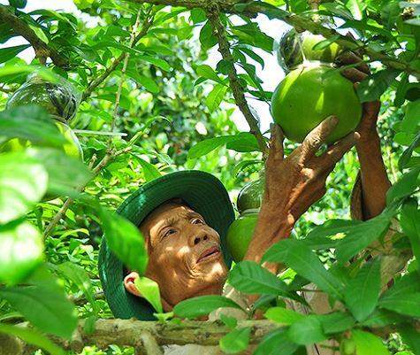 Ngắm vườn đào tiên trăm triệu của lão nông Hậu Giang - Ảnh 1.