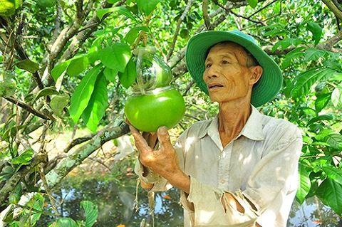 Ngắm vườn đào tiên trăm triệu của lão nông Hậu Giang - Ảnh 5.
