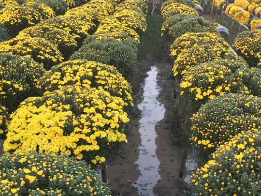 Chưa Tết, làng hoa lớn nhất miền Tây đã nườm nượp khách - Ảnh 3.