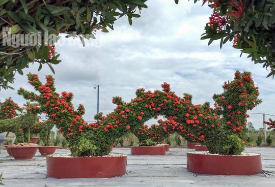 Biến cây trồng bờ rào thành kiểng long quy giá 400 triệu đồng/cặp - Ảnh 3.
