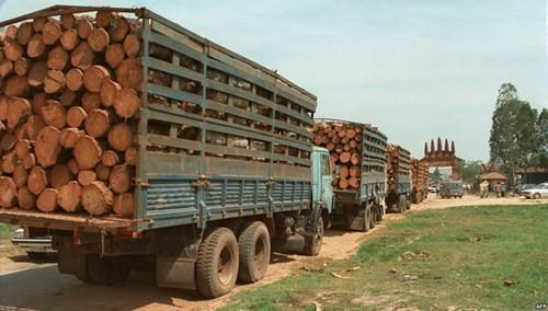 Ngành gỗ Việt Nam và cổ phiếu gỗ trước gió lớn CPTPP: Liệu diều sẽ bay? - Ảnh 1.