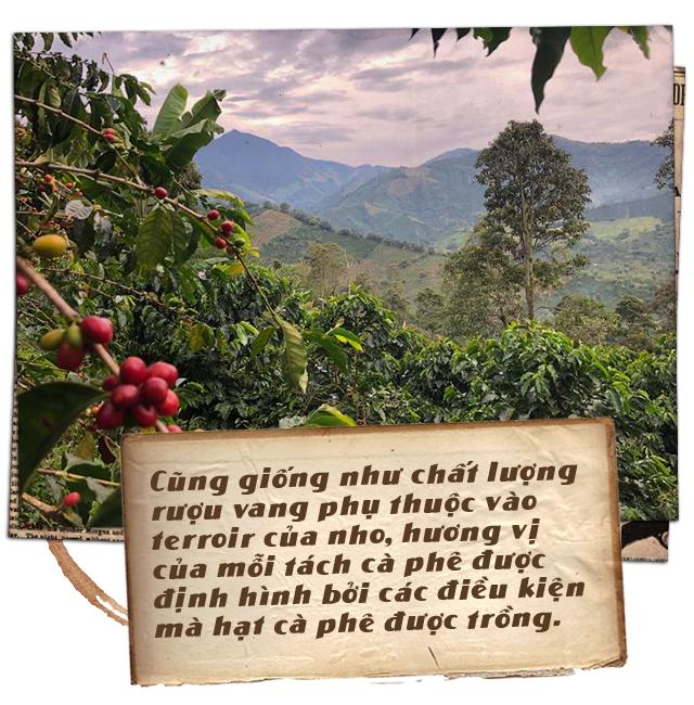 Đọc cuối tuần: Cà phê được ưa thích trên toàn thế giới, bởi nó không chỉ là một loại đồ uống - Ảnh 6.